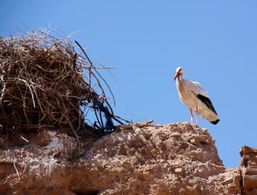 uno dei mille nidi delle cicogne sulle mura del Palais El Badii