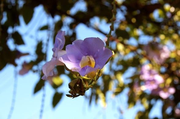 orchidee selvatiche ovunque