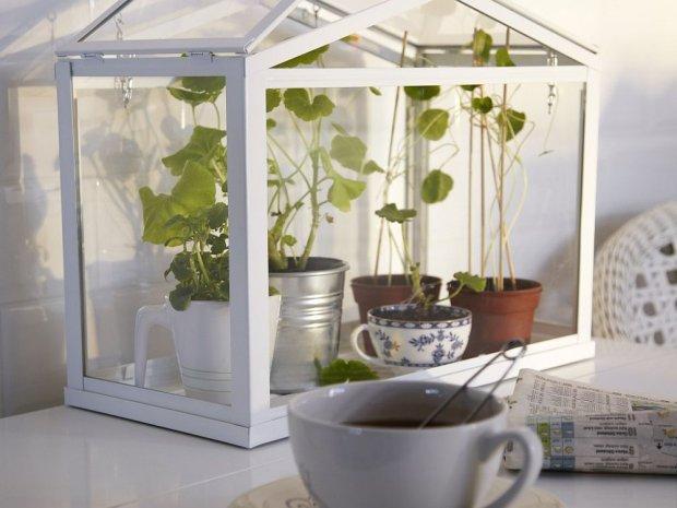 serra Socker per i fanatici delle erbe aromatiche / Ikea 14 euro