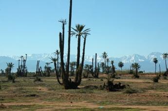 ghiacci e deserto