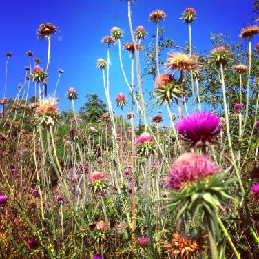 La vegetazione bellissima del parco, sempre Kamenjak