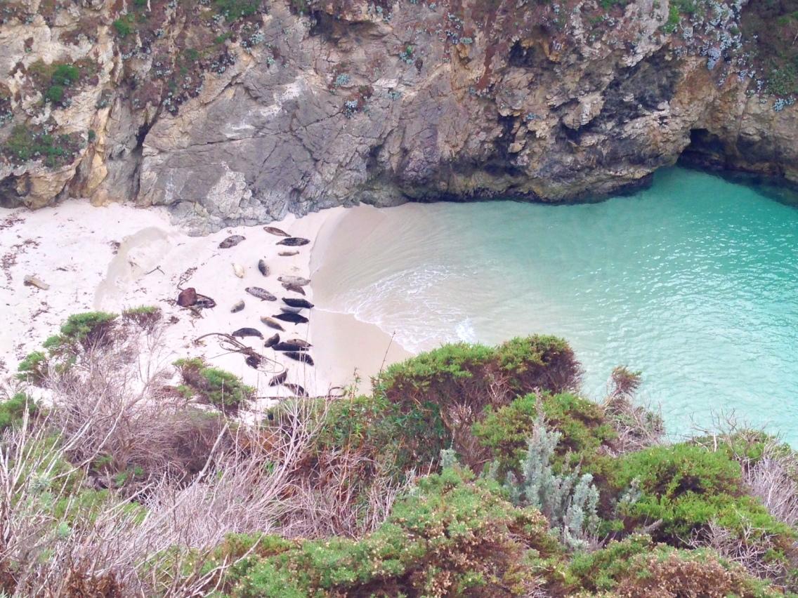La baia abitata da foche a Point Lobos