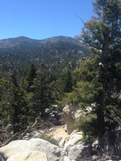 la foresta del Monte San Jacinto